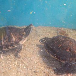 Jak želvy komunikují